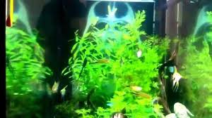 Star Wars Fish Tank Decorations by Acuario De Star Wars Star Wars Aquarium Youtube