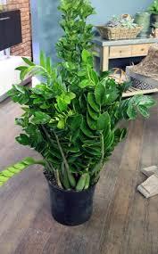 Indoor plant no light