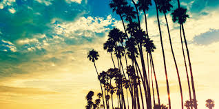 1600x800 Pix Beach Palm Trees Album Wallpapers