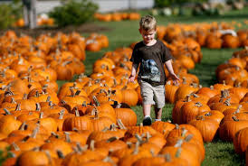 Sand Mountain Pumpkin Patch by A Bounty Of Family Fun Awaits This Fall Archives