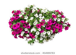 Petunia Flowers Clipping Path Included VOL 2