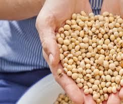 soja aus bayern in der küche der sojabäuerin landidee magazin