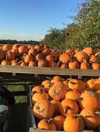 Pumpkin Festival Dayton Ohio by Lucas Brothers Farms Fall Festival