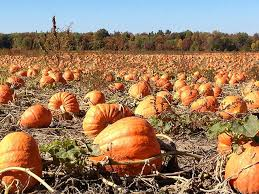 Pumpkin Patch Puyallup River Road by 92 Best Kids Images On Pinterest Raising Kids Washington State