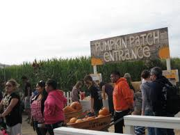 Sunny Side Pumpkin Patch Hours by Pumpkin Patch Gilroy Exploring Hell On Earth And Nearby Paradise
