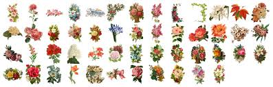 50 Vintage Flowers PNG With Transparent Background