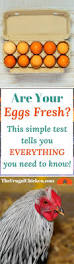 Bad Eggs Float Or Sink In Water by Best 25 If Eggs Float Ideas On Pinterest Egg Float Test Egg