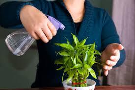 entretien plante grasse d interieur plantes d intérieur rempotage arrosage entretien gamm vert