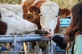 offre emploi chambre agriculture quand des chambres d agriculture oublient leur mission première