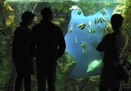grand aquarium de malo aquarium malo horaires 28 images nouveaux horaires d ouverture