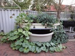 Backyard Aquaponics • View Topic - (Perth, Australia) BA Courtyard ... Backyard Aquaponics Diy System To Farm Fish With Vegetables Images Small Pics On Awesome Forum Tank Video Series Trailer Permaculture Based E A View Topic Gabs Two Ibc King Eriks 5 Imperial Kamado Page 2 Aussie Bbq What Is Learn About Aquaponic Plant Growing Topic No Plant Growth 15 Yo System Lvs Ibc Installing Aquaponics Youtube Outdoor Fniture Design And Ideas Grow Organic Food Easily The Crayfish Build Picture