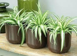 le bureau verte plante de bureau plante verte de bureau isawaya info