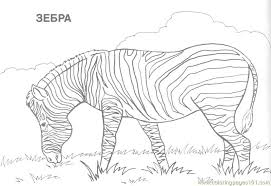 Coloring Pages Zebra Mammals Free Printable Page