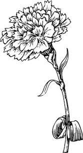 Best 25 Carnation Colors Ideas On Pinterest