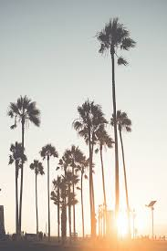 Landscape California Beach Palm Trees Sunset Venice Vertical Vert C1v