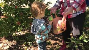 Pumpkin Patch Long Island Ny by Family Fun On The Farm Cornmaze Big Slides Pumpkin Patch Apple