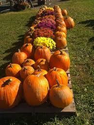 Gust Brothers Pumpkin Farm by Visit Pumpkin O Saurus Rex Howells Family Pumpkin Farm Niagara