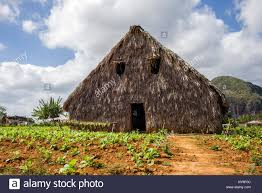 Tobacco Barn In Vinales Stock Photos & Tobacco Barn In Vinales ... Luddytaylor Connecticut Valley Tobacco Museum Nw Park 135 Lang 34 Best Barns Images On Pinterest Children North St Marys County Government Barn In Vinales Stock Photos Project Cville Images Vermonts Heritage Explored New Book Vermont Public Radio 110 Tobacco Farmer And Alamy Tobaco In Pittsylvania Virgialivingcom Old Nc Artwork Drawings Ideas Kentucky