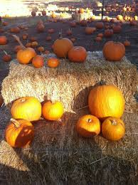 Apple Hill Pumpkin Patches Ca by 10 Best Apple Hill Images On Pinterest Apples Gold And Northern