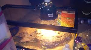 Bearded Dragon Shedding In Patches by Yellow Liquid Coming Out Of Beardies Back U2022 Bearded Dragon Org