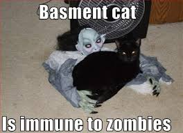 Aim For The Head Basement Cat
