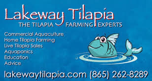About Our Tilapia