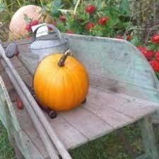 Free Pumpkin Patch Charleston Sc by Smith Rock Ranch Wonderful Pumpkin Patch Corn Maze And Live