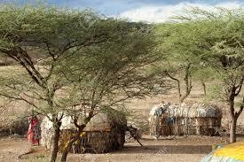 100 Houses F Village And Houses Of The F Samburu Tribe In Kenya