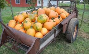 Pumpkin Patch Sacramento Groupon by Missed Deals In Topeka Lawrence Dealminer