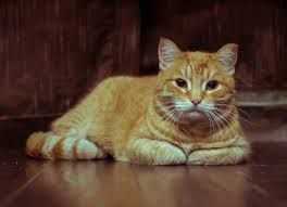 signs of worms in cats tapeworm symptoms how to treat tapeworms in cats petmd