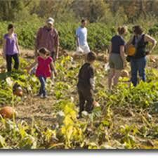 Pumpkin Farms In Belleville Illinois by Braeutigam Orchards 25 Photos U0026 11 Reviews Farmers Market