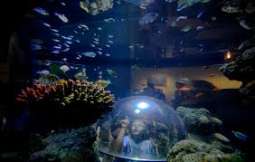 legoland california and sea aquarium travel tips