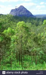 100 Treetops Maleny One Of The Glasshouse Mountains Viewed Over The Treetops