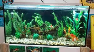 Decorator Crab Tank Mates by Fancy Goldfish Tank Mates Search Betta Fish Aquariums