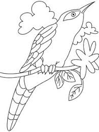 Cuckoo Bird Drawing Coloring Pages