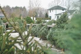 Christmas Tree Types Canada by Canadian Christmas Tree Growers Association Rainforest Islands Ferry