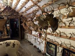 Deer Antler Shed Hunting by The Antler Shed U0027s Largest Collection In The East
