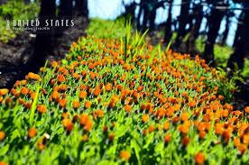 si鑒e social auchan si鑒e social orange 100 images si鑒e social d orange 100 images