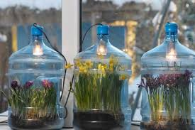 review learn the ins and outs of bulb gardening and enter to win