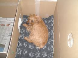 How To Build A Whelping Box For Small Dogs | Yvonne Earl Lintran Dog Transit Box In Chesterfield Derbyshire Gumtree Cab 5 Animal Boxes Fitted Dog Box Best Fit For Vw Touareg Maryland Sled Adventures Llc New Truck Project 2 Hole Alinum 200 Gift Corgi Stock Illustration 506388 Ideas Custom Alinum Biggahoundsmencom The Dapper October 2017 Subscription Review Coupon Working Truck Dogs Housed Metal Boxes Located Under Semi Used Kennel Suppliers And