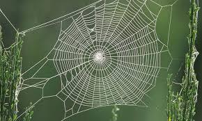 ii 3 une toile pour bloquer l araignée et sa toile
