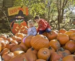 Best Pumpkin Patch Madison Wi by Vala U0027s Pumpkin Patch