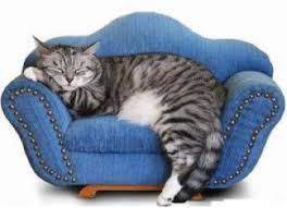 Microfiber Sofas And Cats by Cat Friendly Microfiber Upholstery Fabric