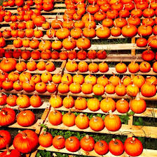 Free Pumpkin Patch In Katy Tx by 246 Best Free Fun In Austin Images On Pinterest Texas Places To