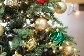 Fraser Christmas Tree Cutting by Choosing The Best Christmas Tree In Roxborough Roxborough