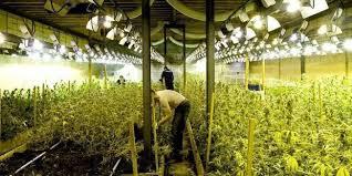 kit chambre de culture cannabis chambre de culture complete cannabis free le substrat si lors de
