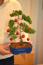 Coral Tree Bonsai Precious Christmas Decorations Martha Stewart Lights