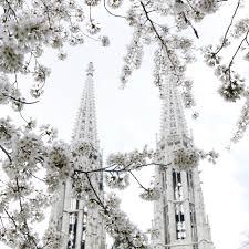 Vienna Twig Christmas Tree Sale by Irinahp U2014 Irinahp Blog U2014 Most Instagrammable Blossom Trees In