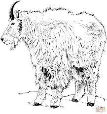 Realistic Rocky Mountain Goat