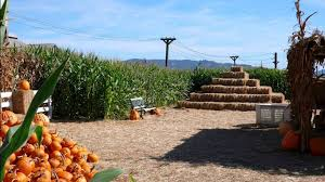 Pumpkin Patch Santa Rosa by Muelrath Ranches Visit Santa Rosa
